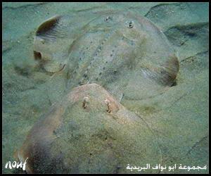 صور من عجائب خلق الله سبحانه وتعالى في اعمااااق البحر sea%2812%29.jpg