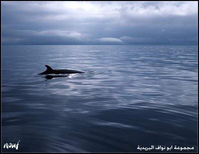صور من عجائب خلق الله سبحانه وتعالى في اعمااااق البحر sea%2816%29.jpg