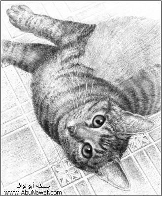 كيف  ترسم قطه  14ssaf