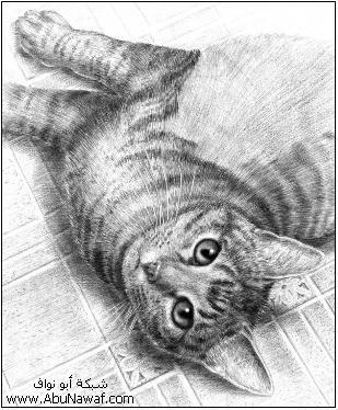 كيف  ترسم قطه  15fdds